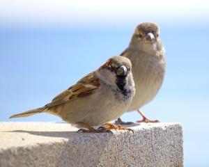 birds-1249120_640