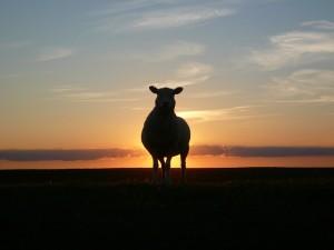 sunset-50494_640