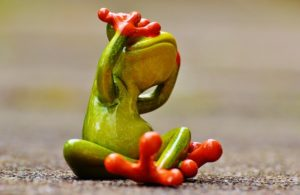 frog-1274766_640